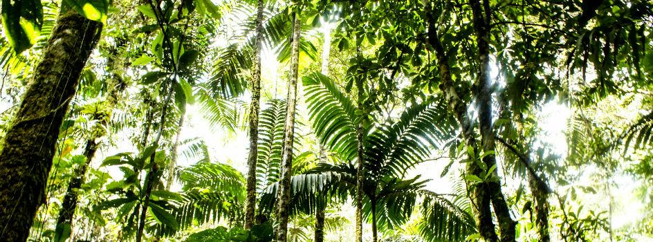 Hoy celebramos el Día del Árbol: miles de especies en el Perú que son bancos mundiales de diversidad biológica para el desarrollo sostenible