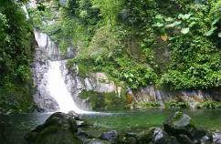 dia-bosques-tropicales-242-pix