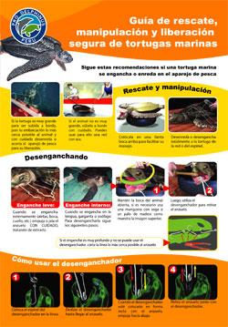 Guia-rescate-tortugas-marinas