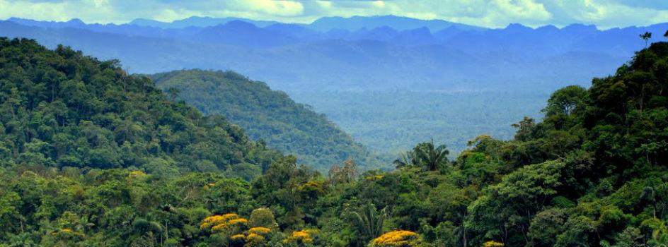 Investigaciones se realizarán de manera gratuita en Áreas Naturales Protegidas (ANP)