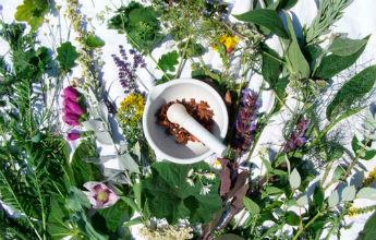 plantas-medicinales 345 pix