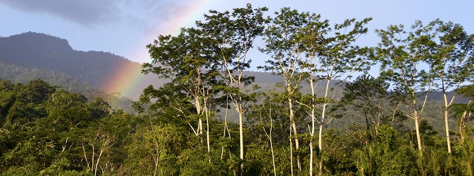 Se aprobó la Estrategia Nacional sobre Bosques y Cambio Climático