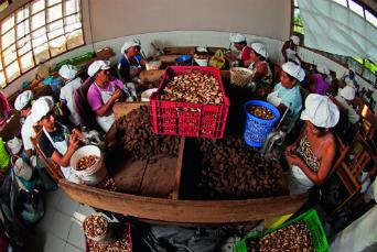 Mujeres amazónicas trabajando con castañas