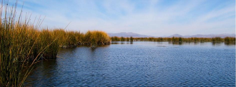 El Ministerio del Ambiente y el Comité Nacional de Humedales invitan a la celebración del Día Mundial de los Humedales