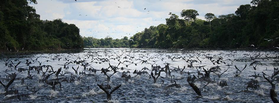 Perú presentó Metodología para la Medición de la Aplicación de los objetivos de Biodiversidad Aichi