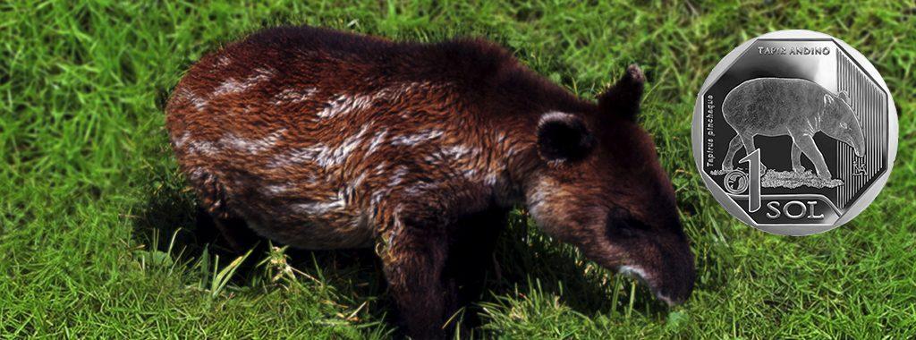 Ministerio del Ambiente y Banco Central de Reserva presentaron moneda de Un Sol con imagen alusiva al tapir andino