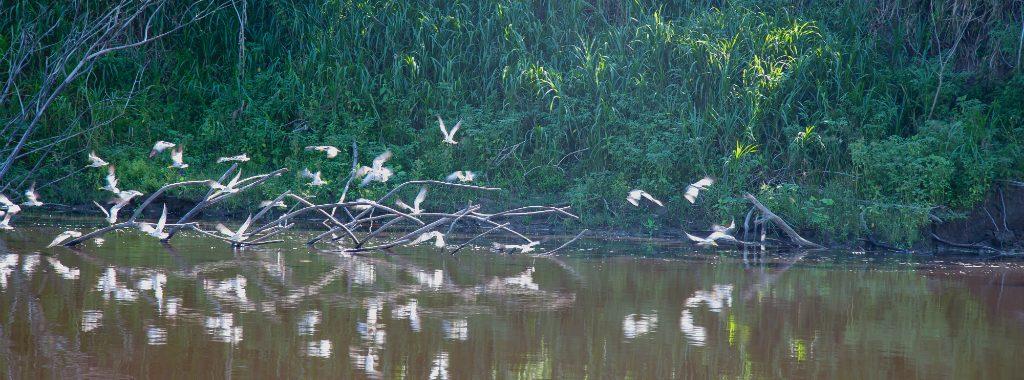 MINAM: Perú participará en evento internacional de avistamiento de aves
